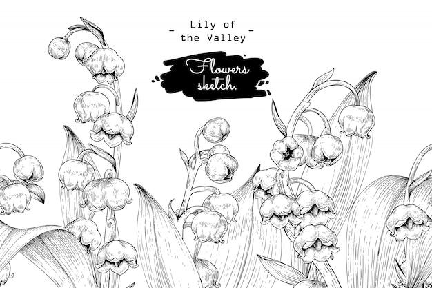 Collezione sketch botanica floreale, disegni di fiori di mughetto.