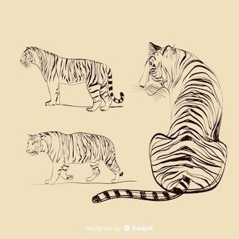 Collezione tigre incolore disegnati a mano