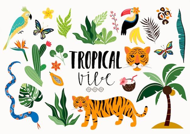 Collezione tropicale con diversi elementi isolati