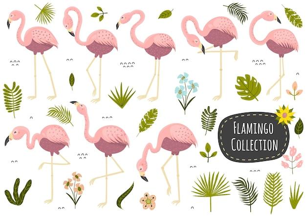 Collezione tropicale di fenicotteri e piante. insieme di elementi isolati. illustrazione