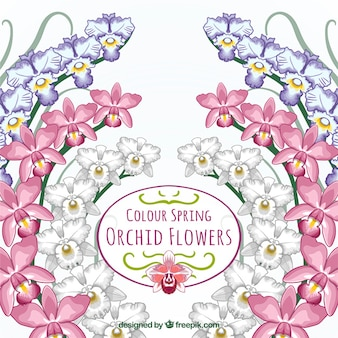 Colore carta di fiori di orchidea