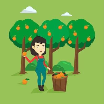 Coltivatore che raccoglie arance