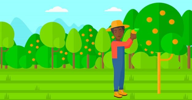 Coltivatore che raccoglie arance.