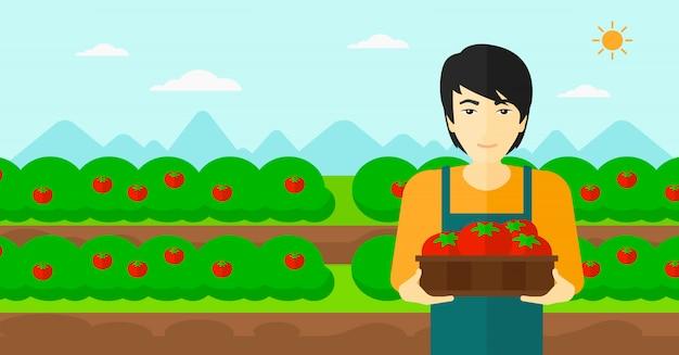 Coltivatore che raccoglie i pomodori.