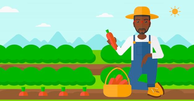 Coltivatore che raccoglie le carote.