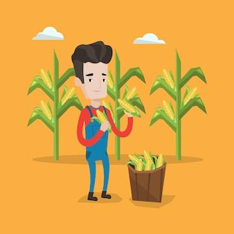 Coltivatore che raccoglie mais