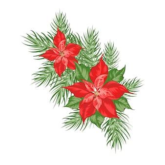 Composizione del fiore rosso della stella di natale isolata sopra bianco