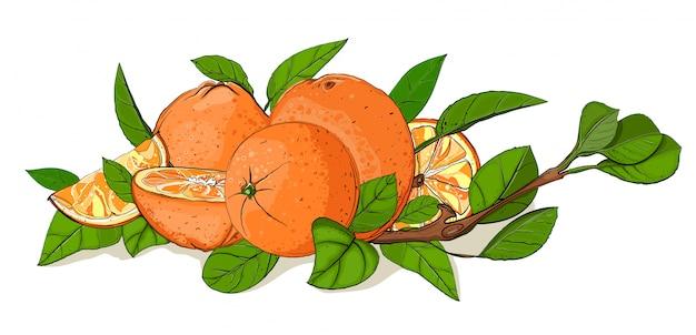 Composizione di foglie e arance fresche