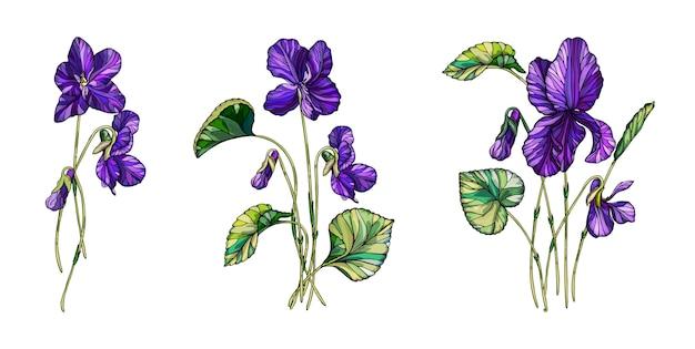 Composizione floreale vettoriale di fiori di viole.