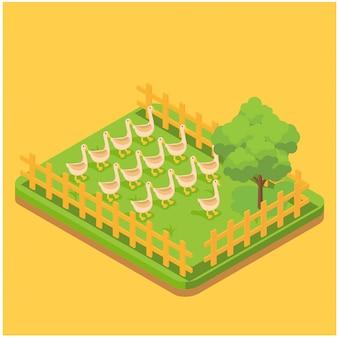 Composizione isometrica di produzione dell'uovo con le immagini delle anatre che si alimentano sull'erba nell'illustrazione di vettore della pagina dell'azienda agricola