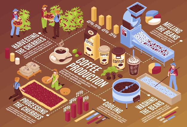 Composizione orizzontale nel diagramma di flusso di produzione isometrica del caffè con le piante infographic isolate degli elementi con l'imballaggio e la gente dei fagioli
