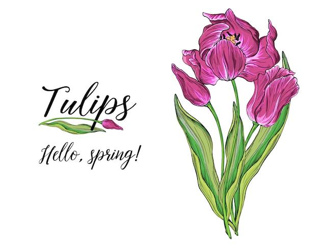 Composizioni di vettore colorato fiori di tulipano, fiori primaverili