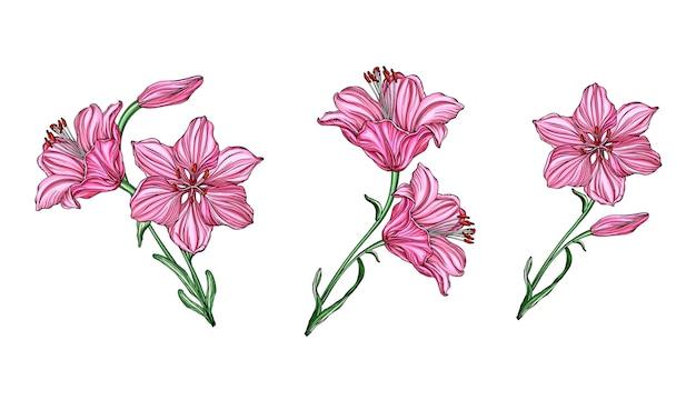 Composizioni floreali vettoriali con fiori di giglio.