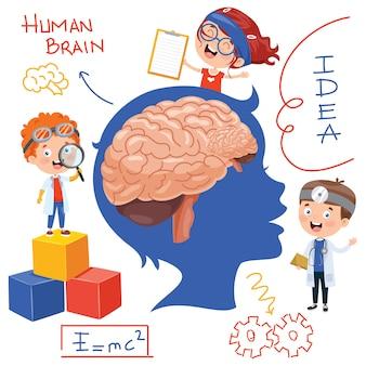 Concetto di cervello anatomia e creatività