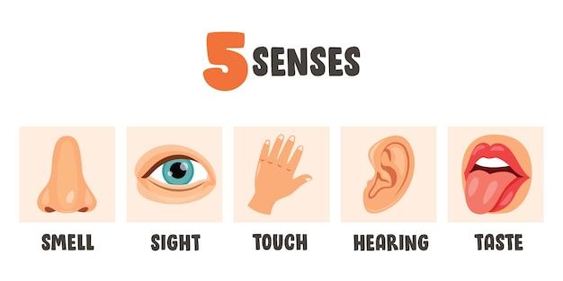 Concetto di cinque sensi con organi umani per bambini