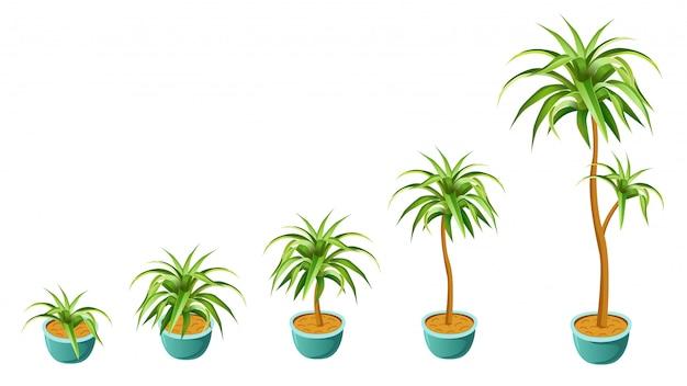 Concetto di palma in crescita.