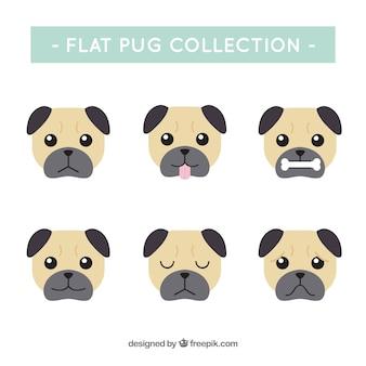 Confezione classica di pugs facce