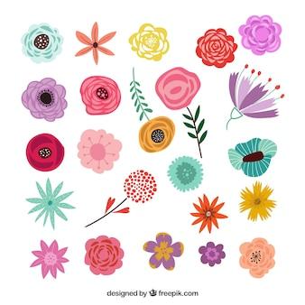 Confezione colorata di elementi floreali disegnati a mano