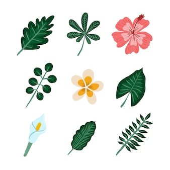 Confezione di fiori e foglie tropicali
