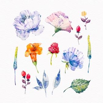 Confezione di fiori primaverili dell'acquerello