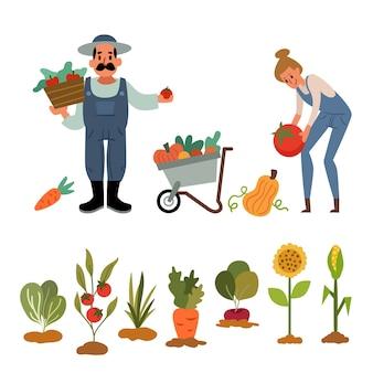 Confezione di illustrazioni agricole