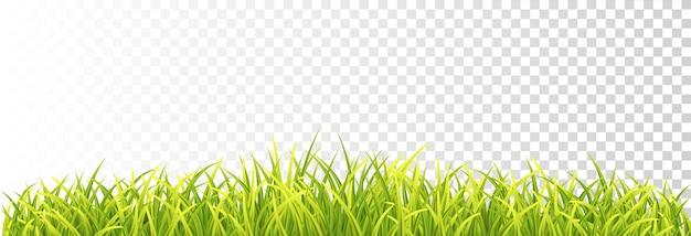 Confine di erba fresca