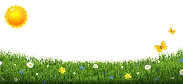 Confine di erba verde con fiori e sole isolato sfondo bianco