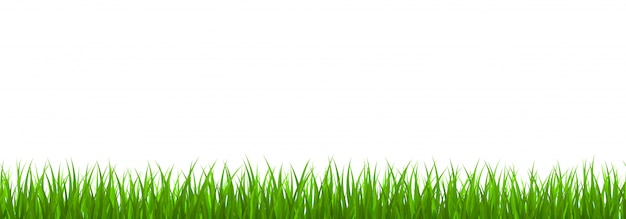 Confine di erba verde fresca
