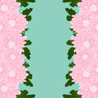 Confine di fiori di crisantemo