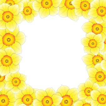 Confine di fiori di narciso
