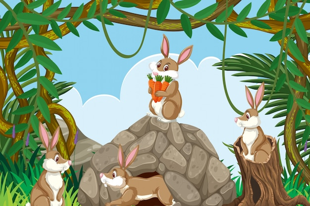 Conigli nella scena della giungla