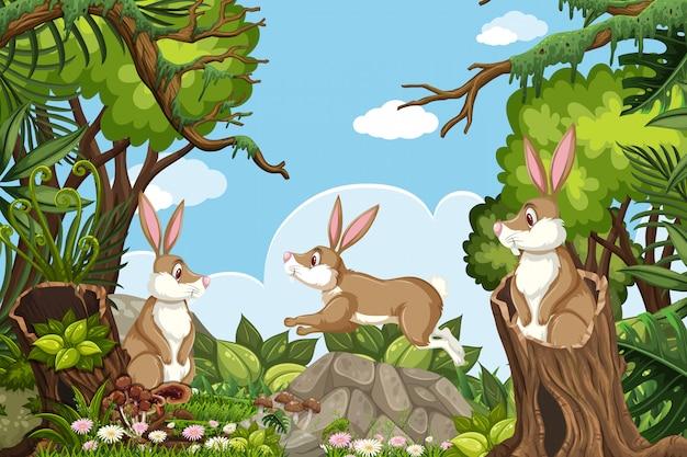 Conigli nella scena della natura