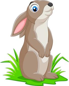 Coniglio divertente cartone animato sull'erba