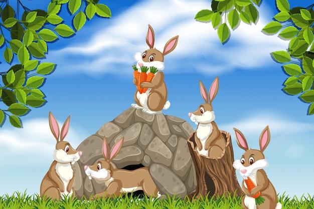 Coniglio nella scena della natura