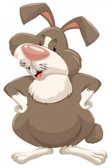 Coniglio sveglio con pelliccia marrone su bianco