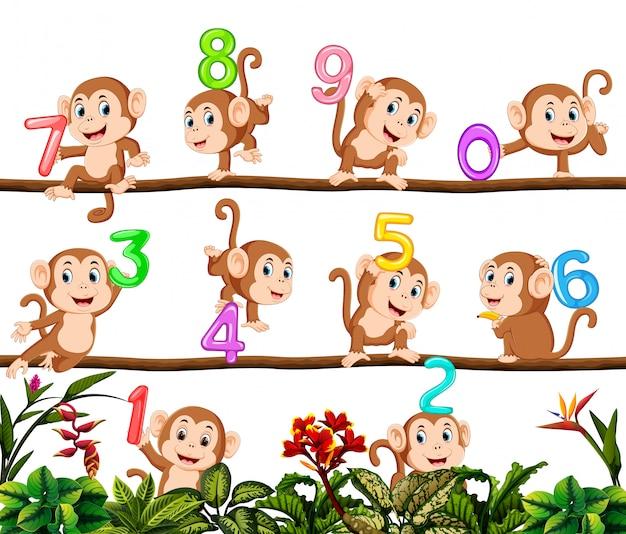 Contiamo con scimmia
