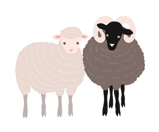 Coppia di pecore e ariete che stanno insieme. adorabili animali ruminanti domestici da cortile o bestiame da fattoria isolato