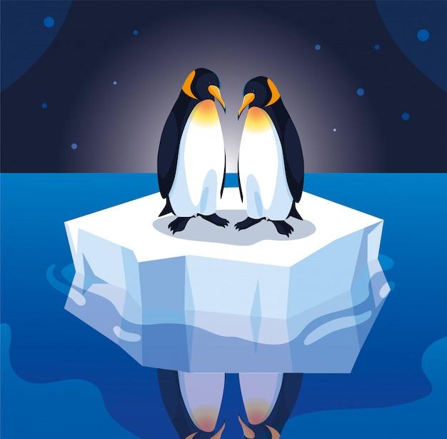 Coppie del pinguino su una deriva della banchisa