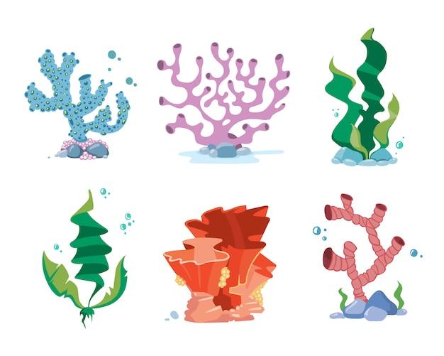 Coralli di barriera corallina