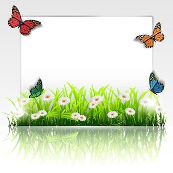 Cornice con erba, camomilla e farfalle