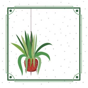 Cornice con pianta d'appartamento su grucce macramè