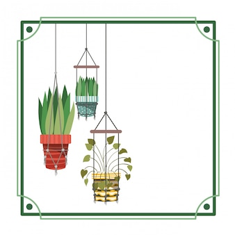 Cornice con piante d'appartamento su grucce macramè