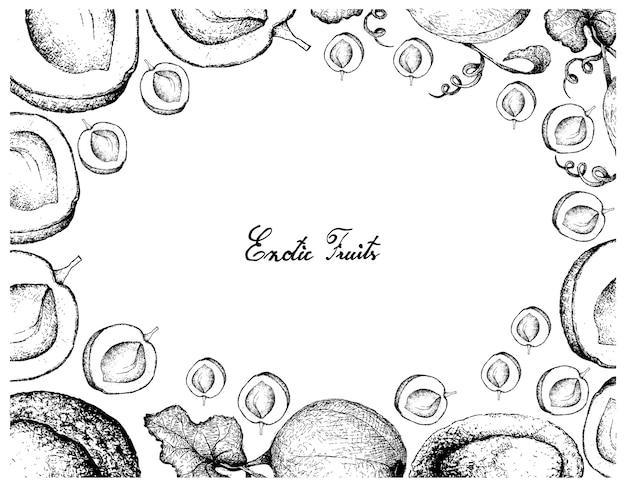 Cornice disegnata a mano di albicocca e melone melata