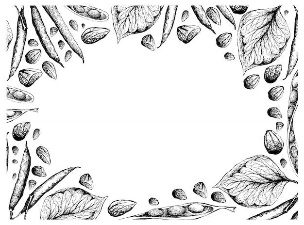 Cornice disegnata a mano di fagioli a grappolo contorto e fagioli verdi