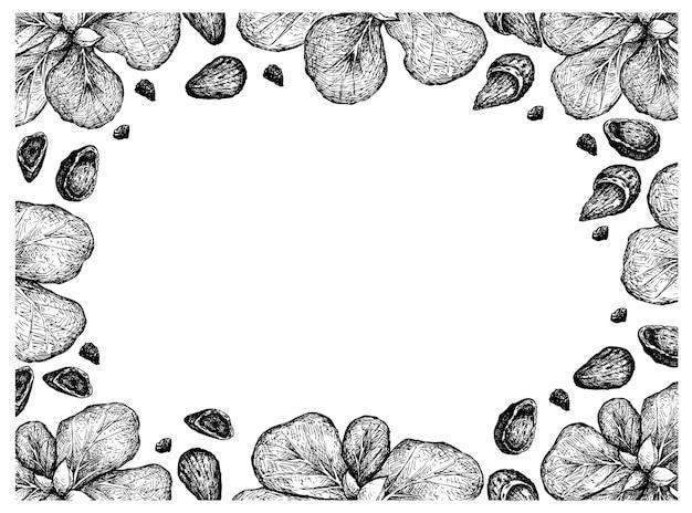 Cornice disegnata a mano di mandorle e frutti terminata catappa