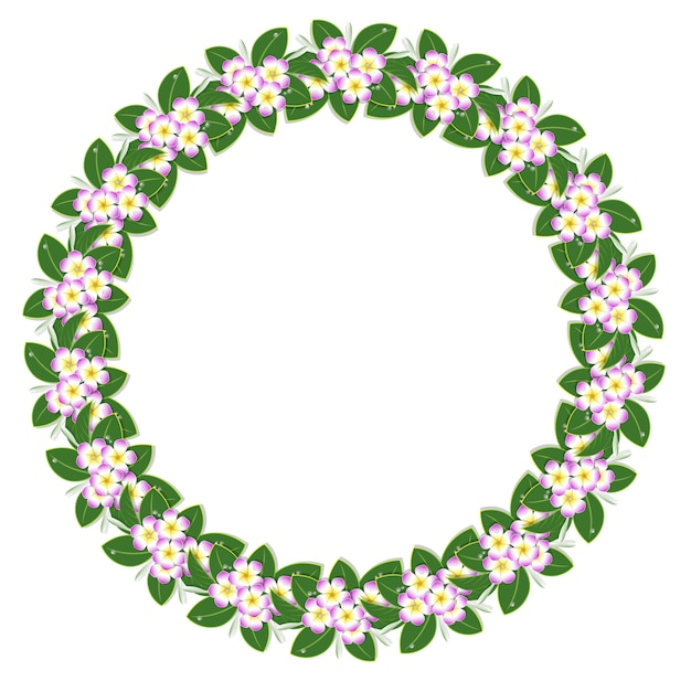 Cornice fiore plumeria cerchio rosa