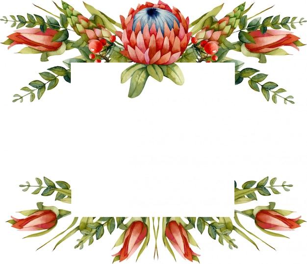 Cornice floreale con fiori di protea rosso acquerello