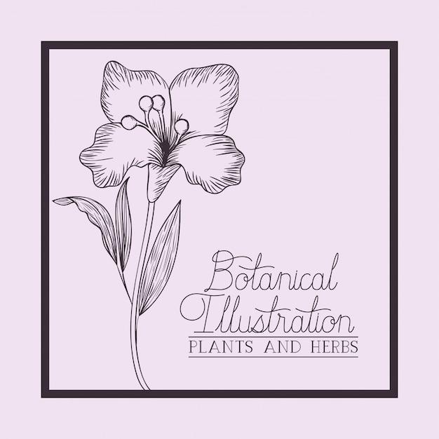 Cornice quadrata con fiori di giglio disegnati