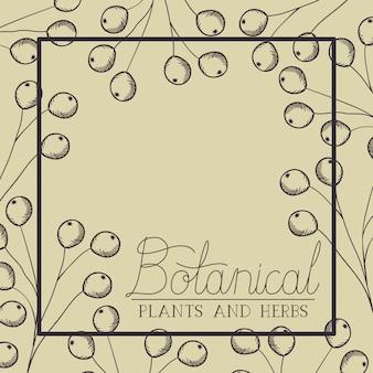 Cornice quadrata di piante ed erbe botaniche