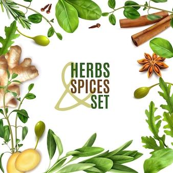 Cornice quadrata realistica di erbe spezie con rosmarino fresco timo rucola spinaci foglie anice zenzero cannella